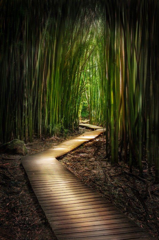 Bamboo Forest - Maui, Hawaii very kool!!