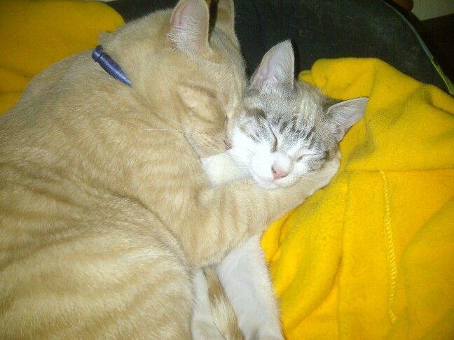 Sweet dreams Tabitha & Meowdo