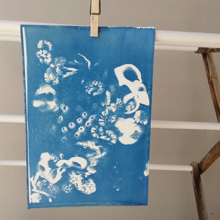 Cyanotype test print drying.