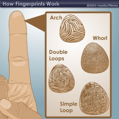 I will work with obtaining and matching finger prints to come to conclusion on who all was involved in a crime.