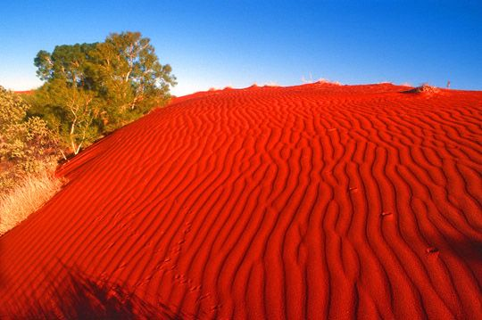 red sand dune was in Hattah Lakes National Park, in northern Victoria, Australia