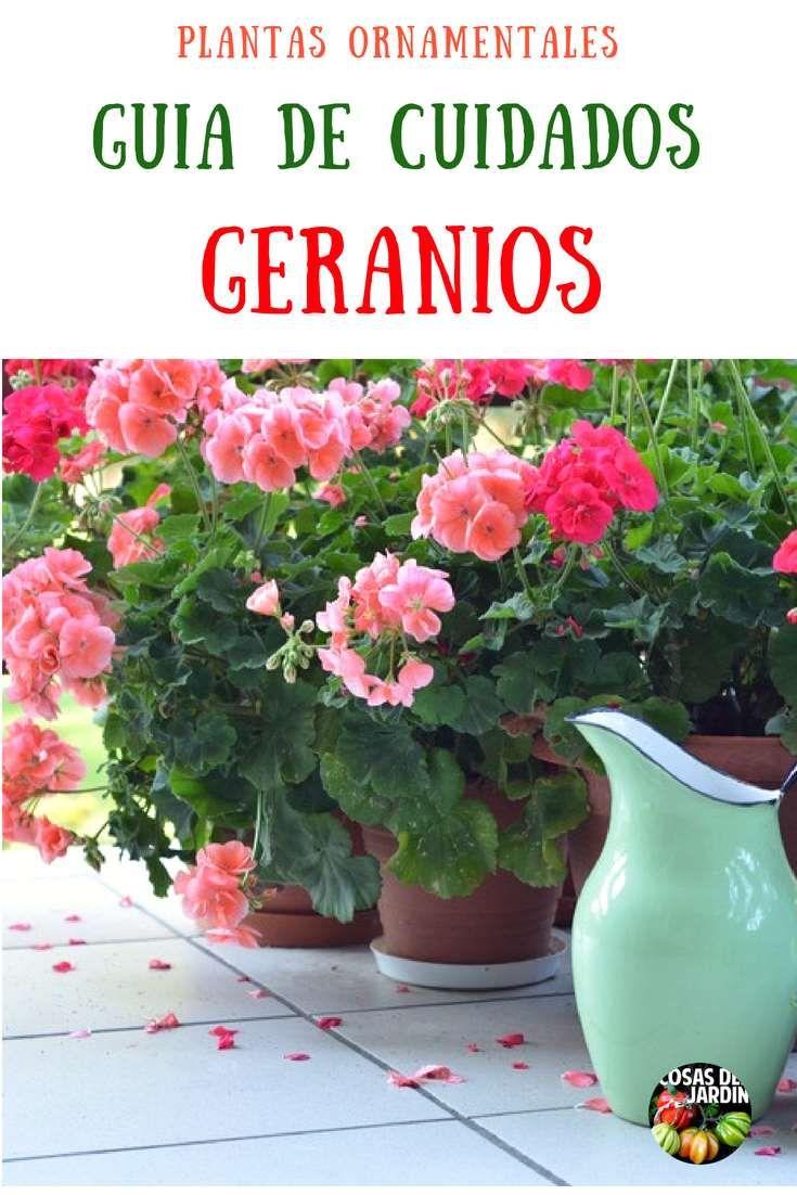 Consejos para el Cuidado de los Geranios 1 Geranium Care, Geranium Plant, Organic Gardening, Gardening Tips, Orquideas Cymbidium, Amarillis, Garden Online, Companion Planting, Garden Crafts