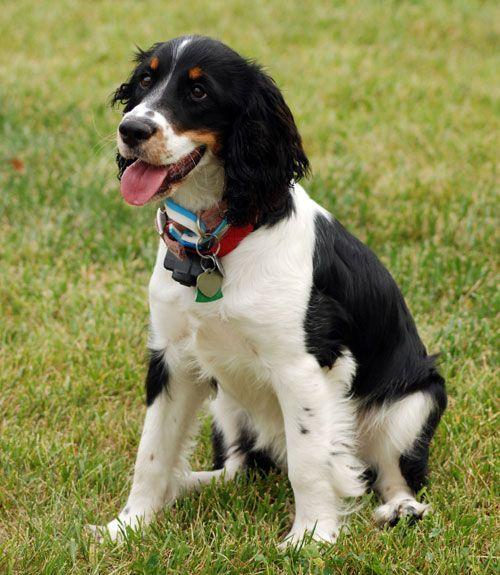 40 Best MediumSized Dogs Dog breeds, Medium dogs