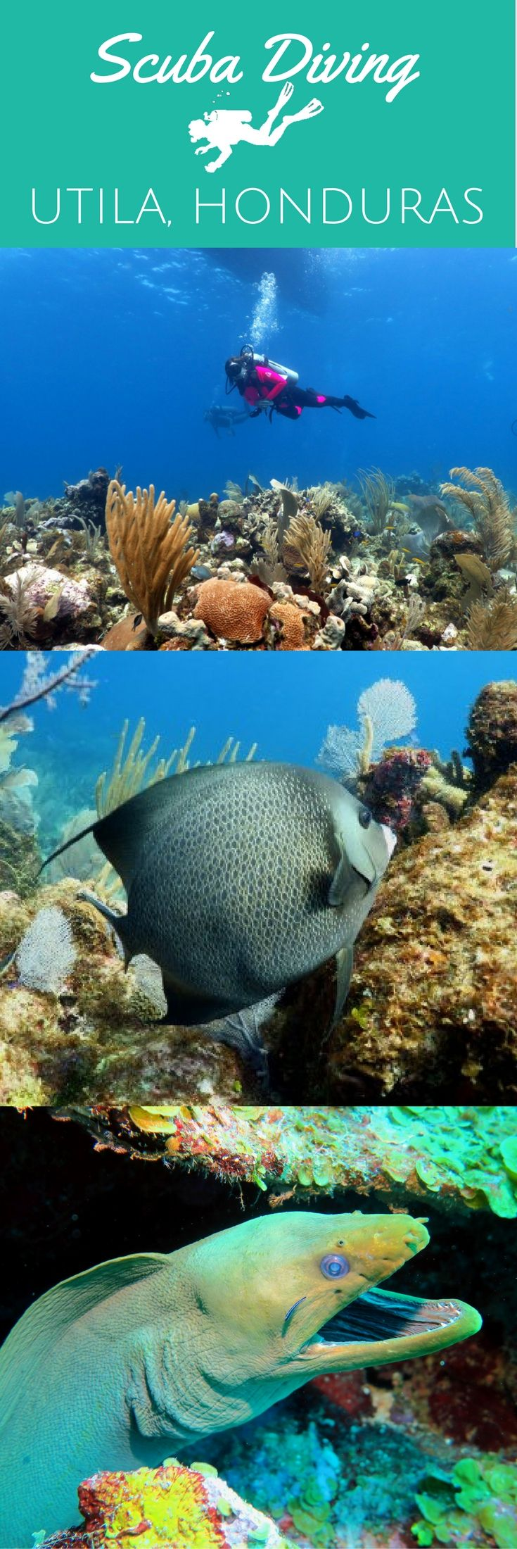 10 reasons to put Utila on your scuba diving bucket list - World Adventure Divers - Scuba diving, Utila, Honduras - read more on https://worldadventuredivers.com/2017/04/07/10-reasons-to-put-utila-on-your-scuba-diving-bucket-list/ http://www.deepbluediving.org/scuba-dive-computer/