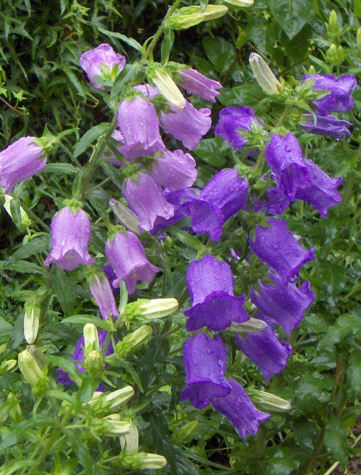 Single Flower Garden : Images about purple garden on pinterest gardens