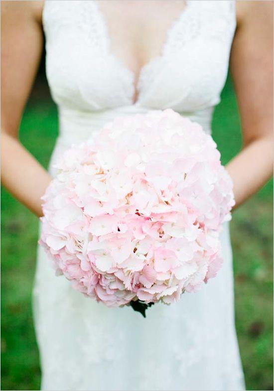 Hortensias rosadas!