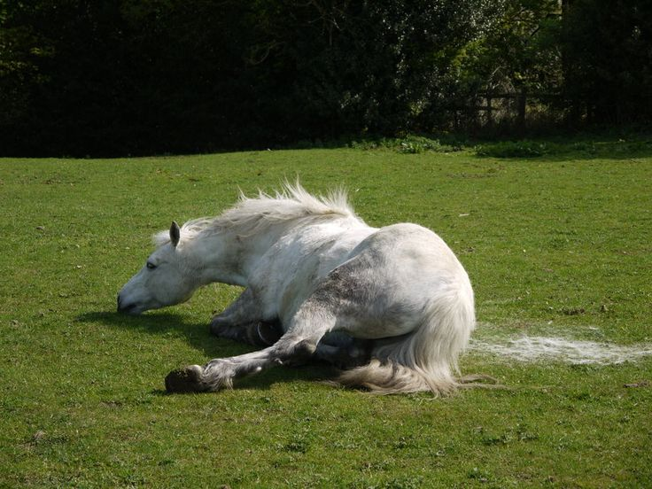 http://humblebeez.deviantart.com/art/horse-rolling-stock-4-205363370