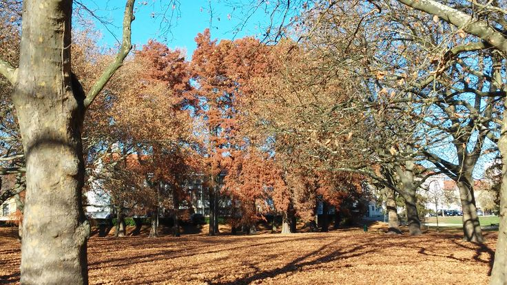 Sárvár várpark ősszel