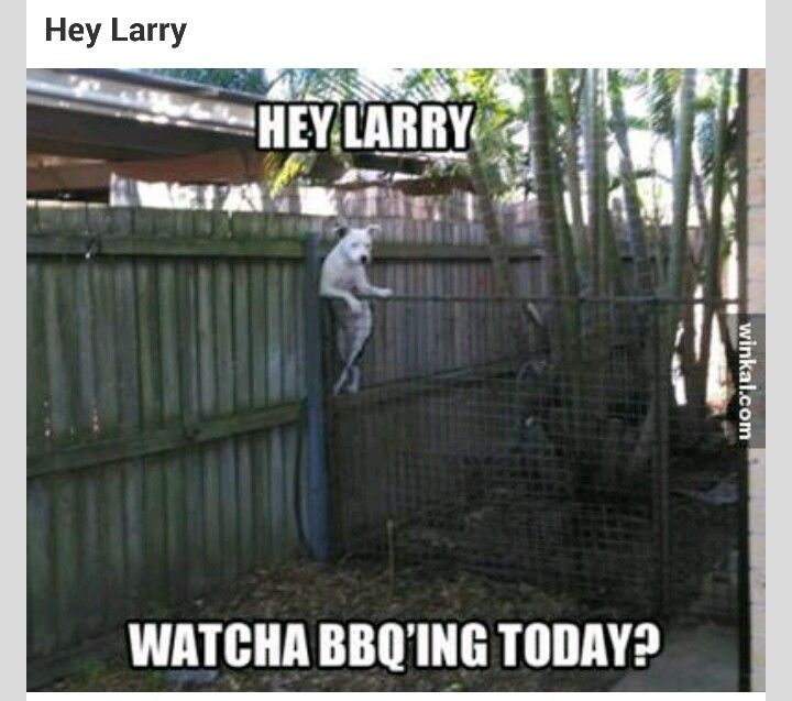2a1b9a8f72504da76f72b13761e5fdac silly dogs funny dogs 19 best my effing nosy neighbors images on pinterest funny stuff,Funny Neighbor Meme