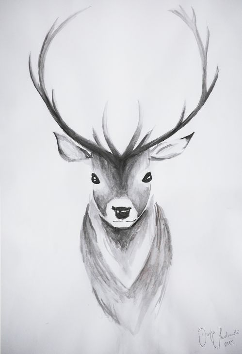 Hirsch Zeichnung / Drawing Tutorial – Deer