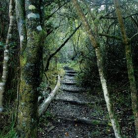 Knysna forest.