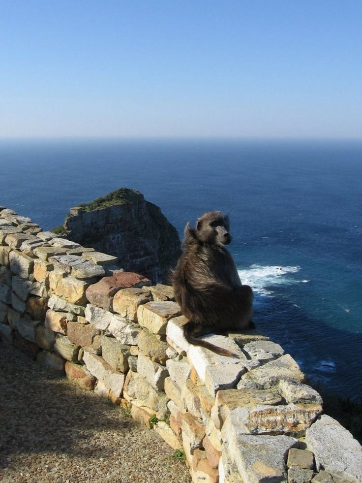 Local Resident, Cape Point