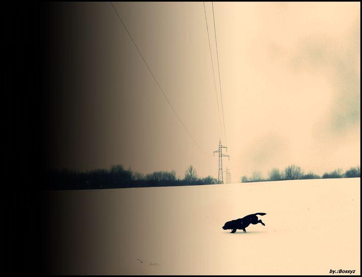 Winter Dog Hungarian Lébény