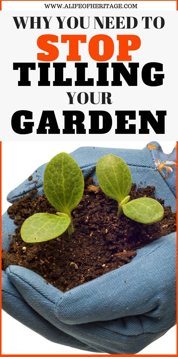Why You Absolutely Must Do No Till Gardening No Till Garden