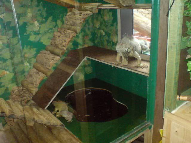 Iguana Cage Plans