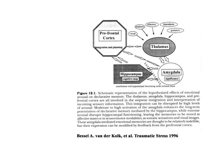 Bessel van der Kolk, et al., 1996, Traumatic Stress effects on declarative memory (hypothesized).