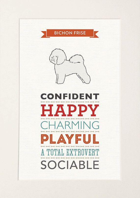 Bichon Frise Dog Breed Traits Print Great gift by WellBredDesign