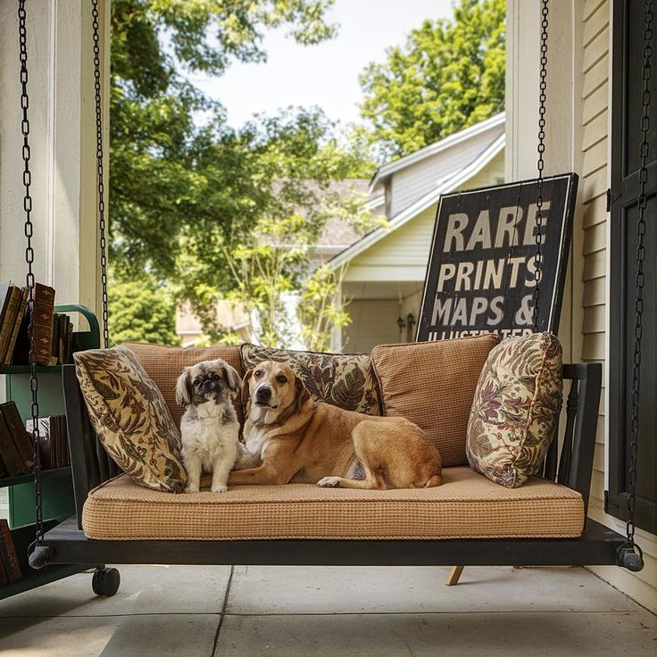 40 best favorite dogs images on pinterest newfoundland dogs gorgeous photos of southern dogs on southern porches sciox Image collections
