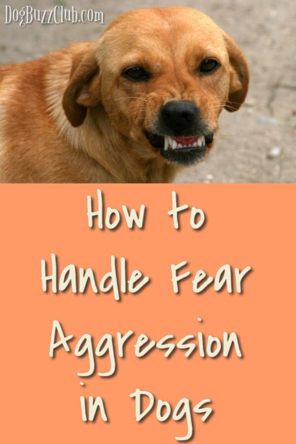 Owners Often Think The Best Approach To Handle Fear Aggression Is