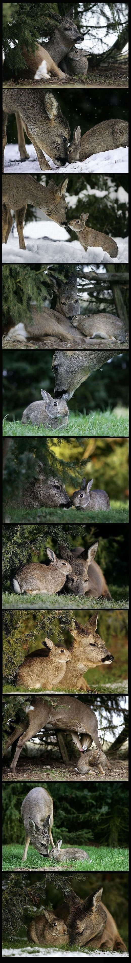 the real life bambi and thumper meet