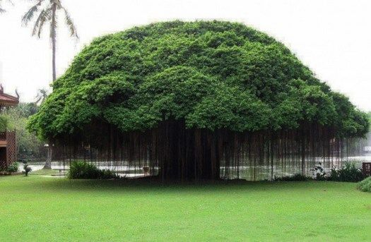 10 trees that seem from another planet