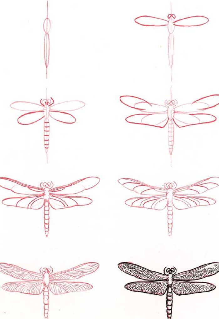 How to Draw a Dragonfly?