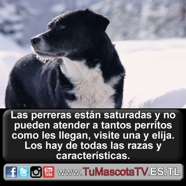 #mascotas #perros #gatos @Cruel_Paraiso