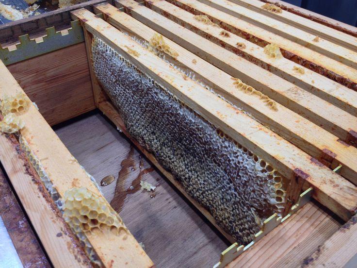 Uit deze raten is ongeveer 8 kilo Landgoed de Horst-honing gekomen!