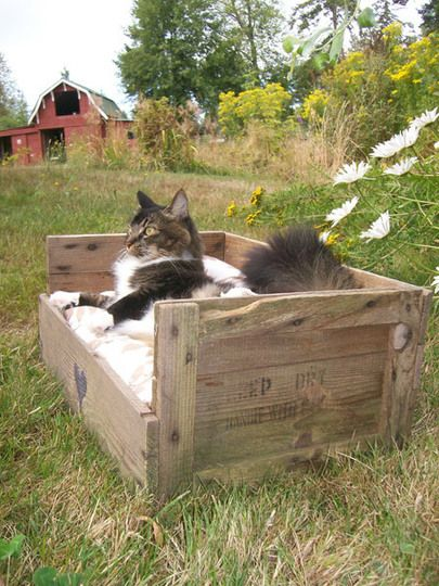 Upcycled Country Pet Bed from a Wooden Fruit Crate