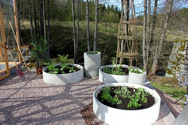 Vacker kryddträdgård Sommar med Ernst 2012