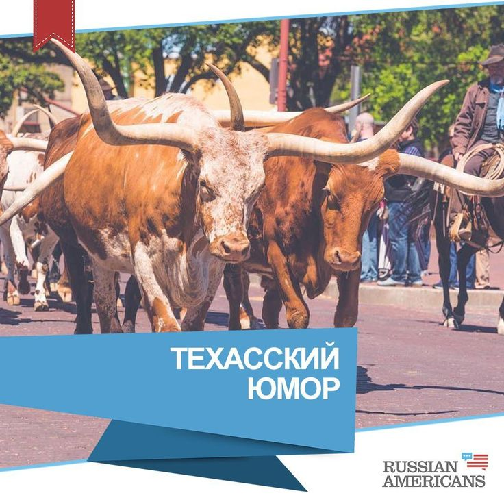 119 отметок «Нравится», 17 комментариев — Такая Америка 🗽 о США (@russian_americans) в Instagram: «@keiushka Longhorns bulls😎 Fort Worth stockyards👌 Юмор важный компонент жизни для многих людей.…» . #быки #ведущий #задеть #ковбойской #техас #толпа #черта #чувства #шоу #юмор #texas #fortworth #fortworthtx #fortworthstockyards