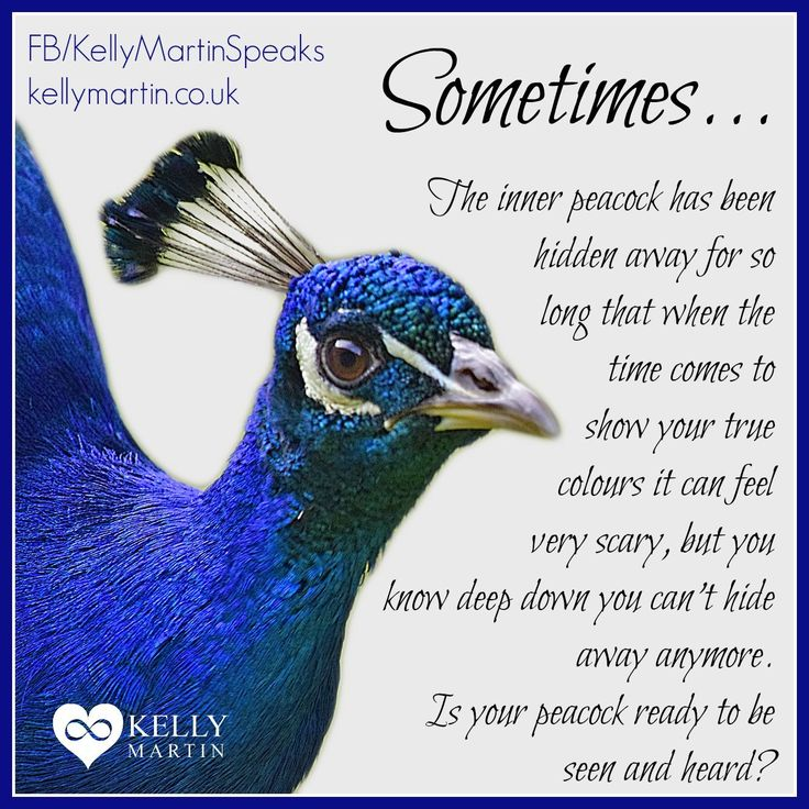 Sometimes... The inner peacock has been hidden away for so long that when the time comes to... #quote #success #peacock