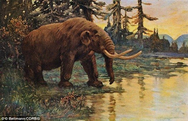 Mammoths preferred to be closer to the retreating ice sheet where grasses were more abunda...