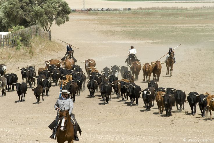 Guided tour of Jerez and a Ganaderia | CroisiEurope#toros #bull #caballos #horses