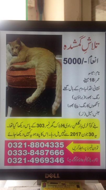 "Hello, Don't ignore me please please don't ignore me. Mere post Bohat Bohat Bohat lengthy hai but I request you admin I request mere humble request hai please share it as it is. Please aisay he share kar dein. This is  about ""May-Soo"" my  Helpless lost cat who needs your help. Mere post Bohat lengthy hai please. iss ko aisay he share karein. And I want all the  members to read the whole post. Please all you readers Please please. My mother has fallen ill due to this loss. Mere post Bohat…"