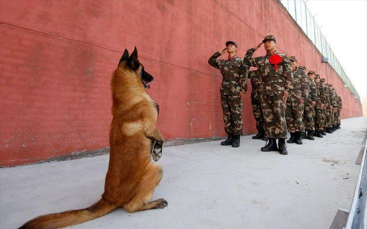 Στρατιωτικός σκύλος στέκεται στα δύο πόδια, καθώς στρατιώτες χαιρετούν το φυλάκιο στη Σουτσιάν, στην επαρχία Τσιανγκσού, στην Κίνα.