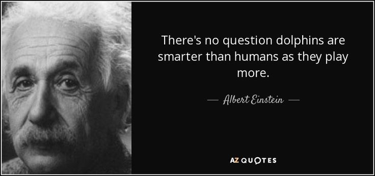Albert Einstein quote: There's no question dolphins are smarter ...
