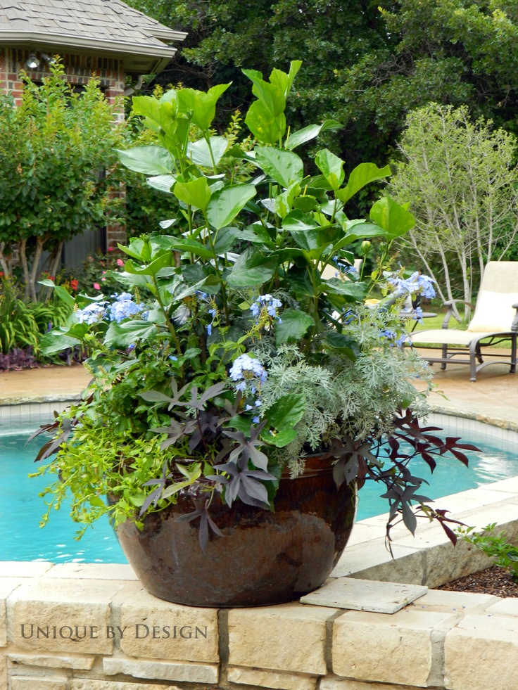 293 best images about container gardening hanging for Garden design yeovil