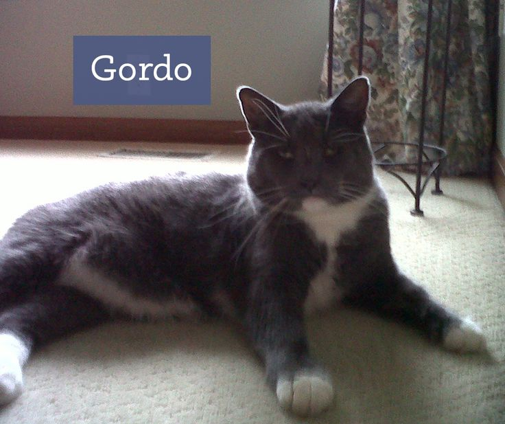 "Meet Gordo, his litter box is fresh and clean thanks our litter box cleaner and deodorizer combo.  ""Keeps the cat box smelling beautiful!"" - Gordo's momma, Kathryn  Get it here! http://etsy.me/1FplTQ6"