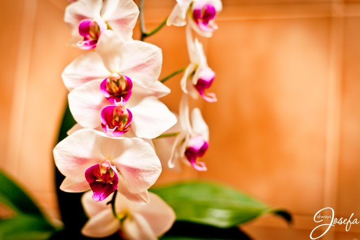 White orchids  www.alwaysjosefa.com