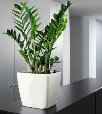 891 melhores imagens de jardins decorativos no pinterest hortas jardinagem e crescendo. Black Bedroom Furniture Sets. Home Design Ideas