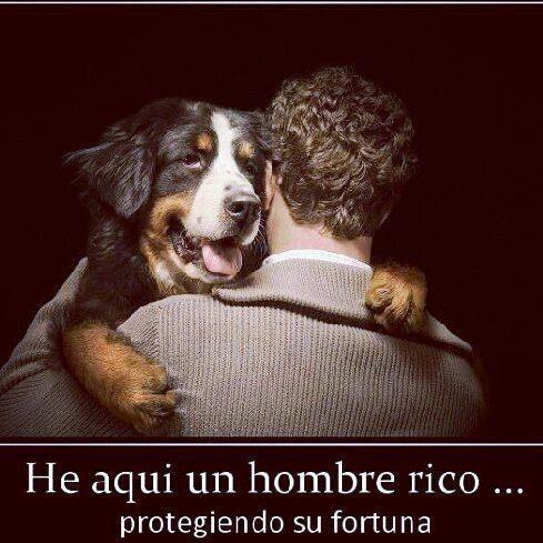 #perros #amigos #tesoros                                                                                                                                                      Más
