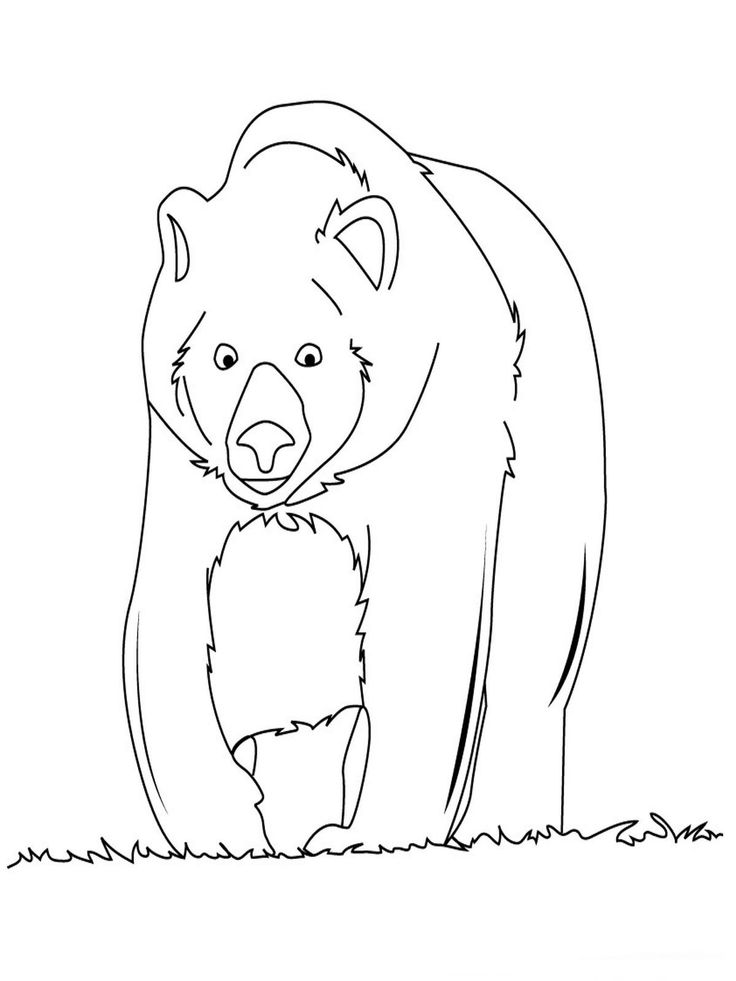 baylor bears coloring pages | 75 best images about Bear Birthday Party theme on ...