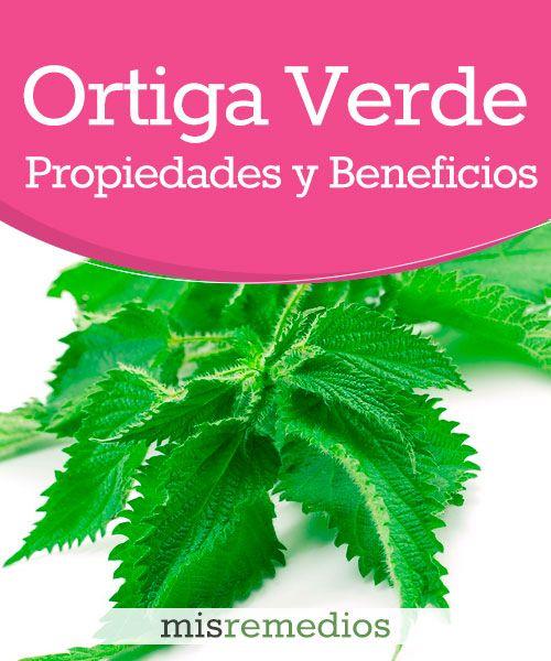 #Ortiga verde - Propiedades y Beneficios #PlantasMedicinales