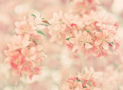 Light pink flowers tumblr mightylinksfo