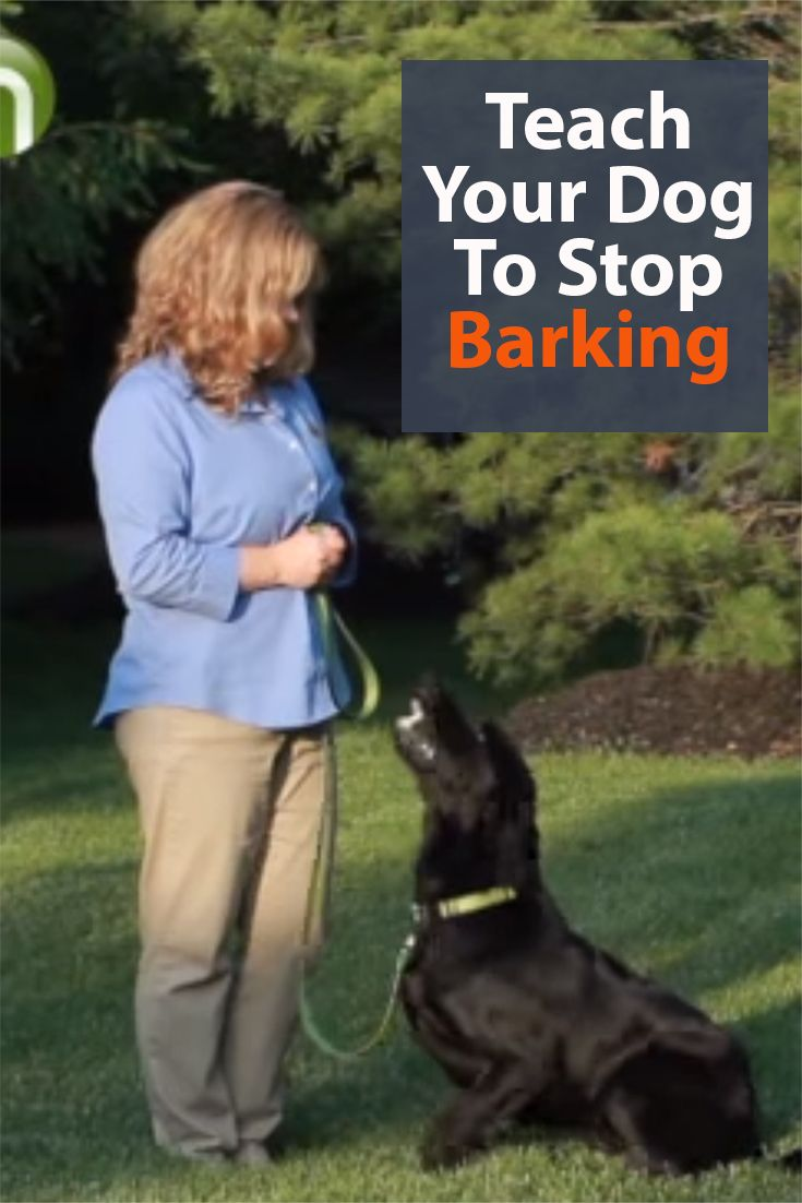 How To Stop A Dog From Barking Dog Training Dog Training Tips