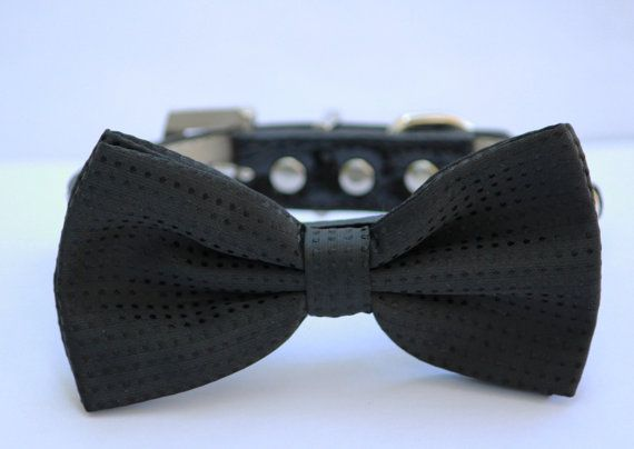 Black Black Dog Bow Tie - Chic Black Dog Bow tie-with high quality leather collar. $20.99, via Etsy.