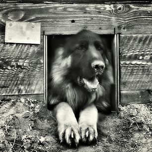 #germanshepherd #shepard #loveshepards #puppylove #doggy #instashepherd #countrylife #igerspoland #vscopoland  #visitpoland #ourpoland #loves_poland #bestofpoland #poland #warsaw #instawarsaw #instawarszawa  #blackandwhitephotography #nature_perfection #p