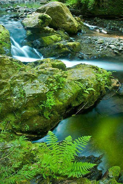 Cascading Creek    -  Olympic Rainforest, Washington   USA