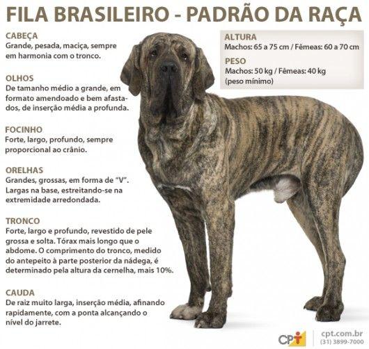 Padrão da raça Fila Brasileiro
